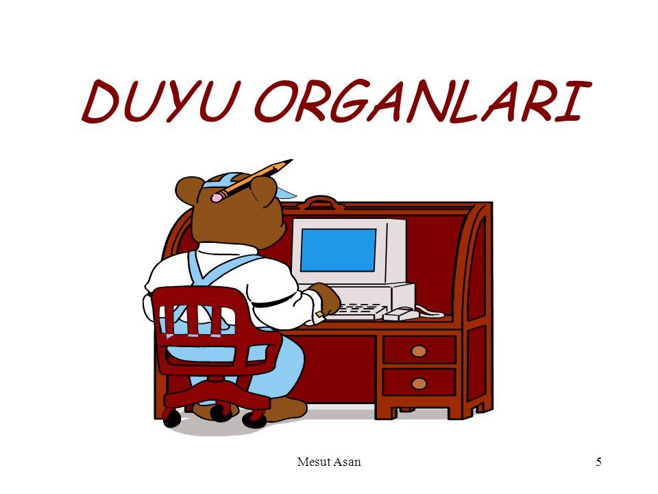DUYU ORGANLARI Mesut Asan5