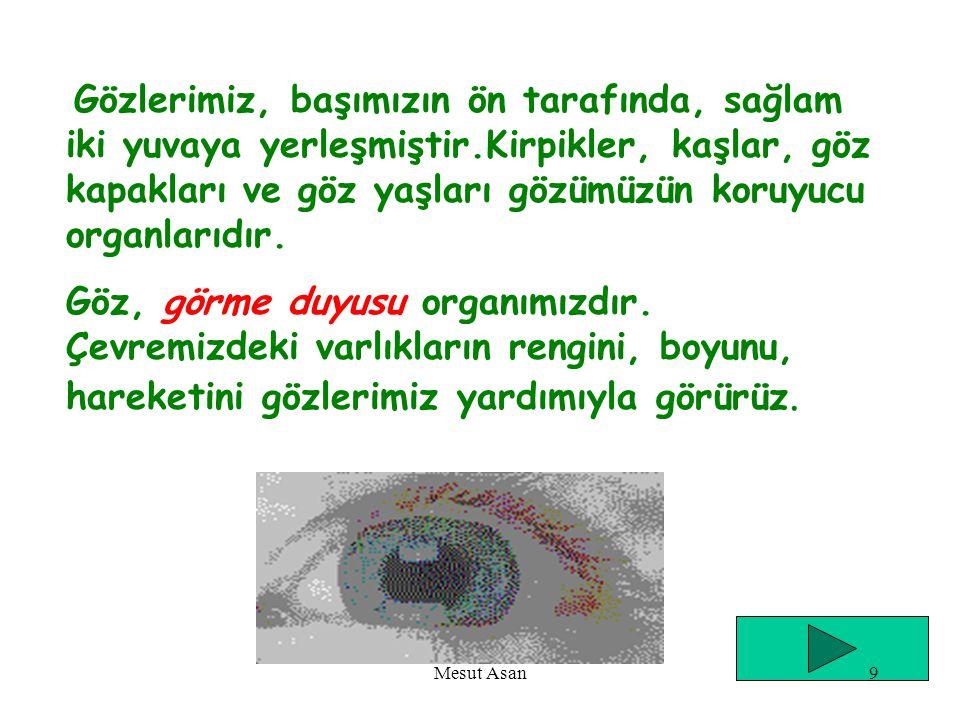Göz, kulak, burun, dil ve deri duyu organlarımızdır. Mesut Asan39