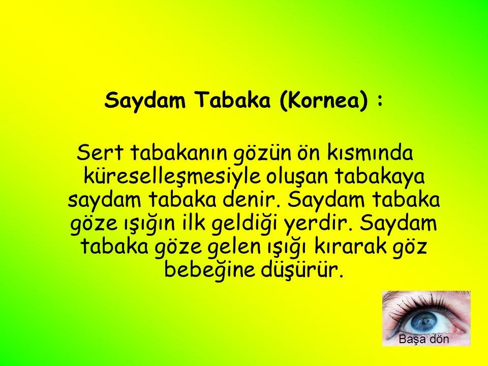 Saydam Tabaka (Kornea) : Sert tabakanın gözün ön kısmında küreselleşmesiyle oluşan tabakaya saydam tabaka denir. Saydam tabaka göze ışığın ilk geldiği