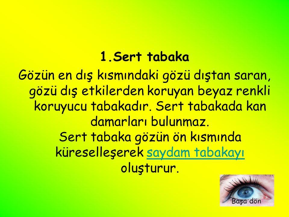 Saydam Tabaka (Kornea) : Sert tabakanın gözün ön kısmında küreselleşmesiyle oluşan tabakaya saydam tabaka denir.