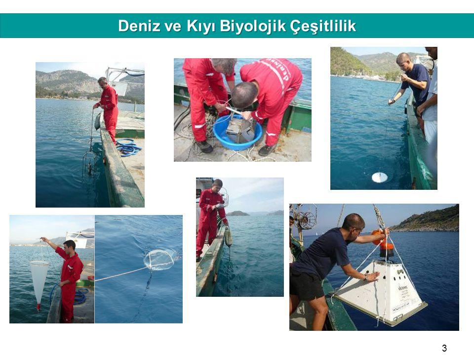 HAFIZAMIZI TAZELEYELİM Deniz ve Kıyı Biyolojik Çeşitlilik 5 mm 4