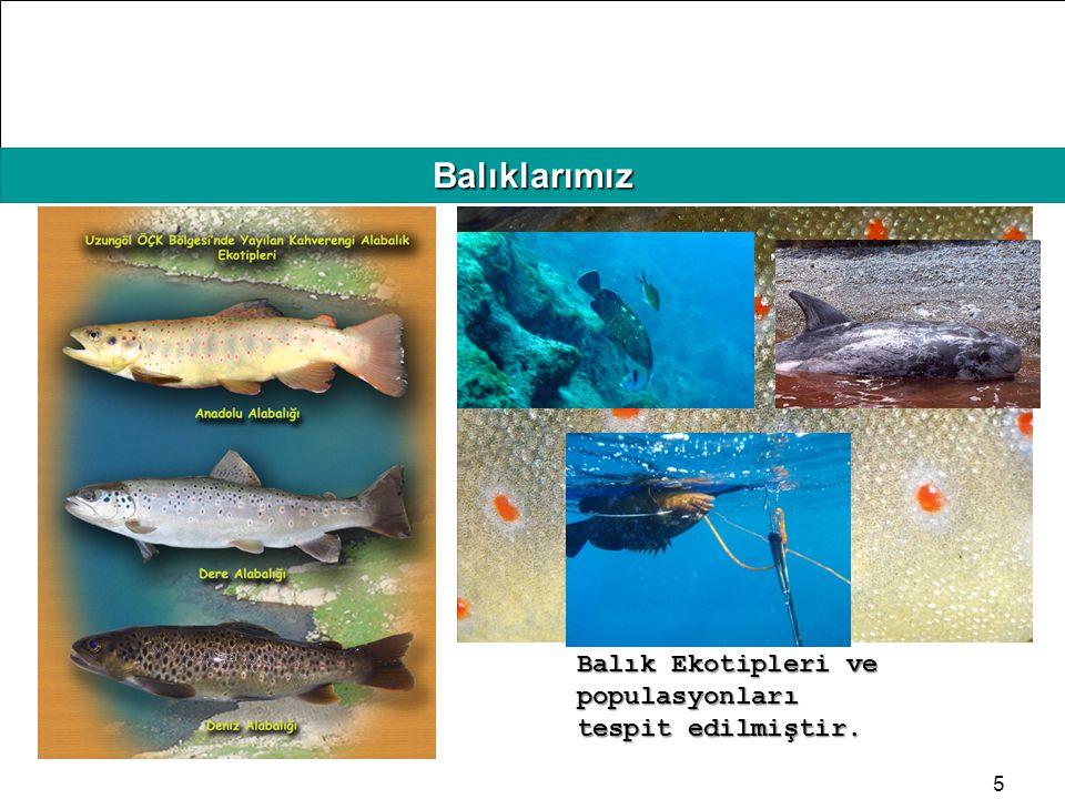 HAFIZAMIZI TAZELEYELİM Balıklarımız 5 Balık Ekotipleri ve populasyonları tespit edilmiştir.