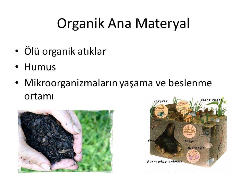 Organik Ana Materyal Ölü organik atıklar Humus Mikroorganizmaların yaşama ve beslenme ortamı