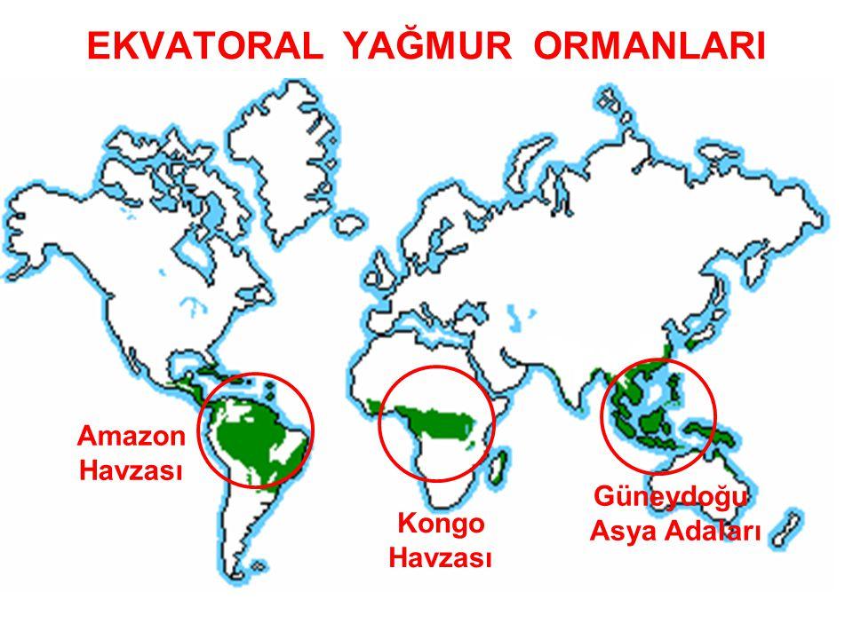 EKVATORAL YAĞMUR ORMANLARI Amazon Havzası Kongo Havzası Güneydoğu Asya Adaları