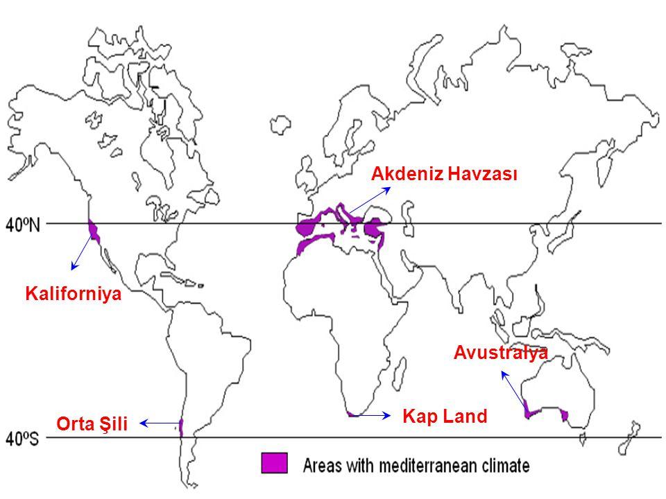 Kaliforniya Orta Şili Kap Land Avustralya Akdeniz Havzası