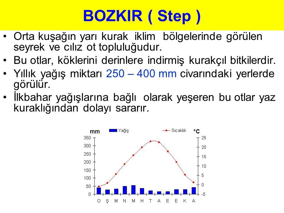 BOZKIR ( Step ) Orta kuşağın yarı kurak iklim bölgelerinde görülen seyrek ve cılız ot topluluğudur. Bu otlar, köklerini derinlere indirmiş kurakçıl bi