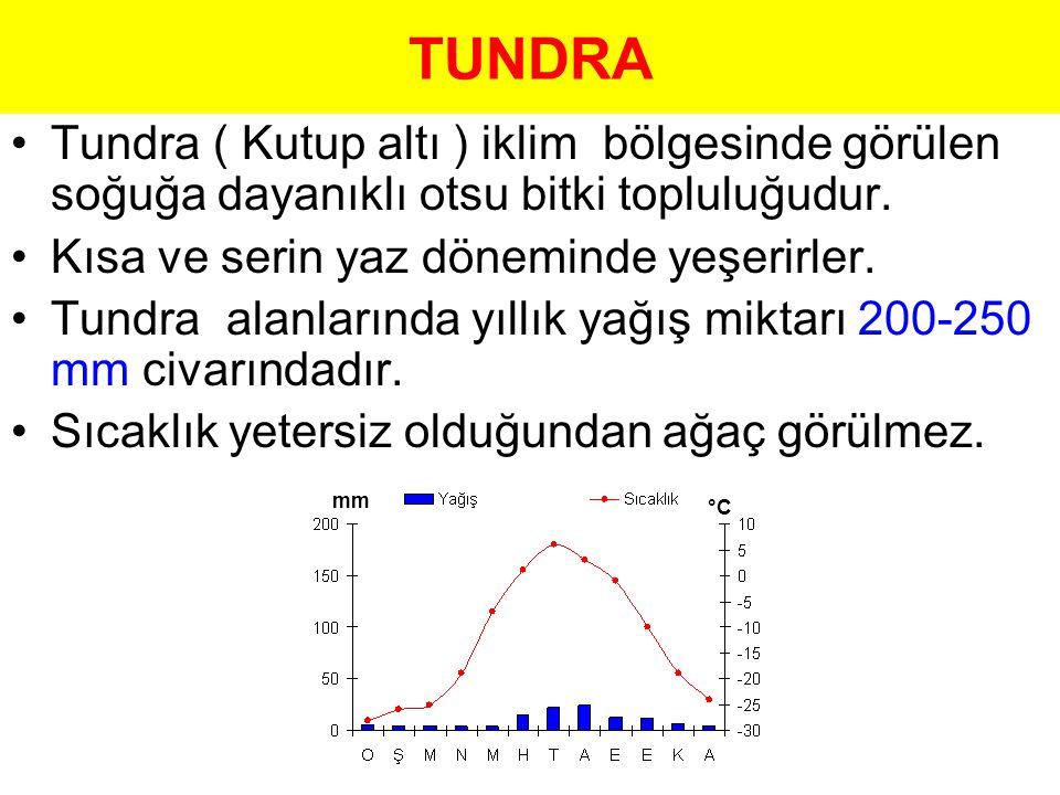 TUNDRA Tundra ( Kutup altı ) iklim bölgesinde görülen soğuğa dayanıklı otsu bitki topluluğudur. Kısa ve serin yaz döneminde yeşerirler. Tundra alanlar