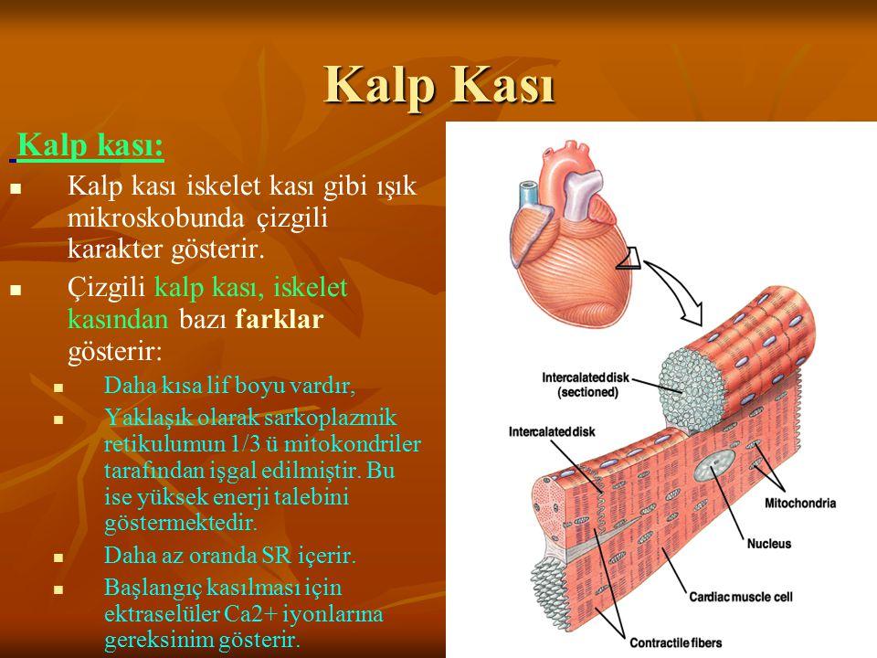 Kalp Kası Kalp kası: Kalp kası iskelet kası gibi ışık mikroskobunda çizgili karakter gösterir. Çizgili kalp kası, iskelet kasından bazı farklar göster