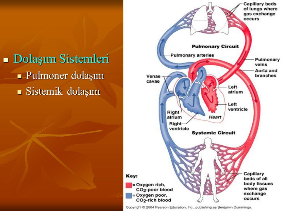 Dolaşım Sistemleri Dolaşım Sistemleri Pulmoner dolaşım Pulmoner dolaşım Sistemik dolaşım Sistemik dolaşım