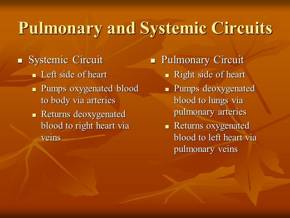 Kalp kası: Dallanma gösterir, Tek bir nüklous içerir, Kas lifleri birbirine interkalat disklerle bağlanır.