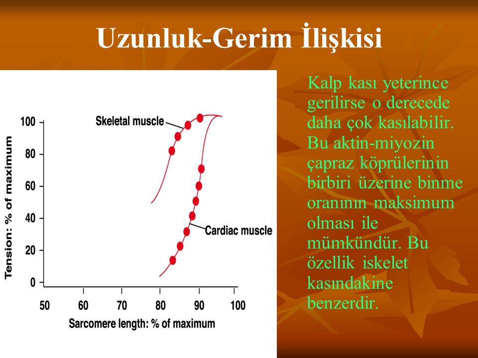 Uzunluk-Gerim İlişkisi Kalp kası yeterince gerilirse o derecede daha çok kasılabilir. Bu aktin-miyozin çapraz köprülerinin birbiri üzerine binme oranı