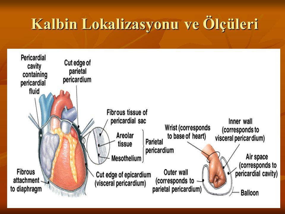 Kalp Duvarı Üç tabakadan oluşur: Üç tabakadan oluşur: Epicardium: Kalbin yüzeyini kaplayan seröz membrandır Epicardium: Kalbin yüzeyini kaplayan seröz membrandır Myocardium: Kalp kasılmasından sorumlu kaslardan oluşan orta tabakadır Myocardium: Kalp kasılmasından sorumlu kaslardan oluşan orta tabakadır Endocardium: Kalbin iç boşluğunu kaplayan en içteki tabakadır Endocardium: Kalbin iç boşluğunu kaplayan en içteki tabakadır