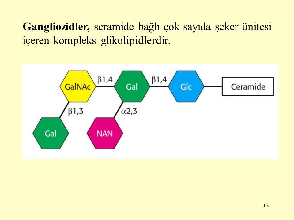 15 Gangliozidler, seramide bağlı çok sayıda şeker ünitesi içeren kompleks glikolipidlerdir.