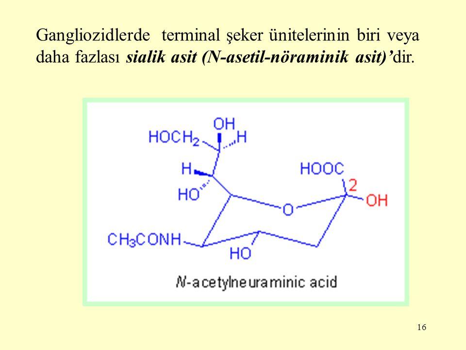 16 Gangliozidlerde terminal şeker ünitelerinin biri veya daha fazlası sialik asit (N-asetil-nöraminik asit)'dir.