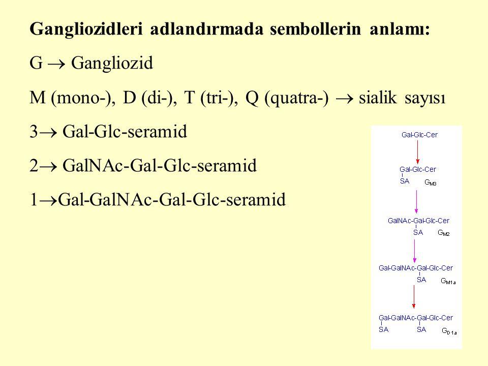 17 Gangliozidleri adlandırmada sembollerin anlamı: G  Gangliozid M (mono-), D (di-), T (tri-), Q (quatra-)  sialik sayısı 3  Gal-Glc-seramid 2  GalNAc-Gal-Glc-seramid 1  Gal-GalNAc-Gal-Glc-seramid