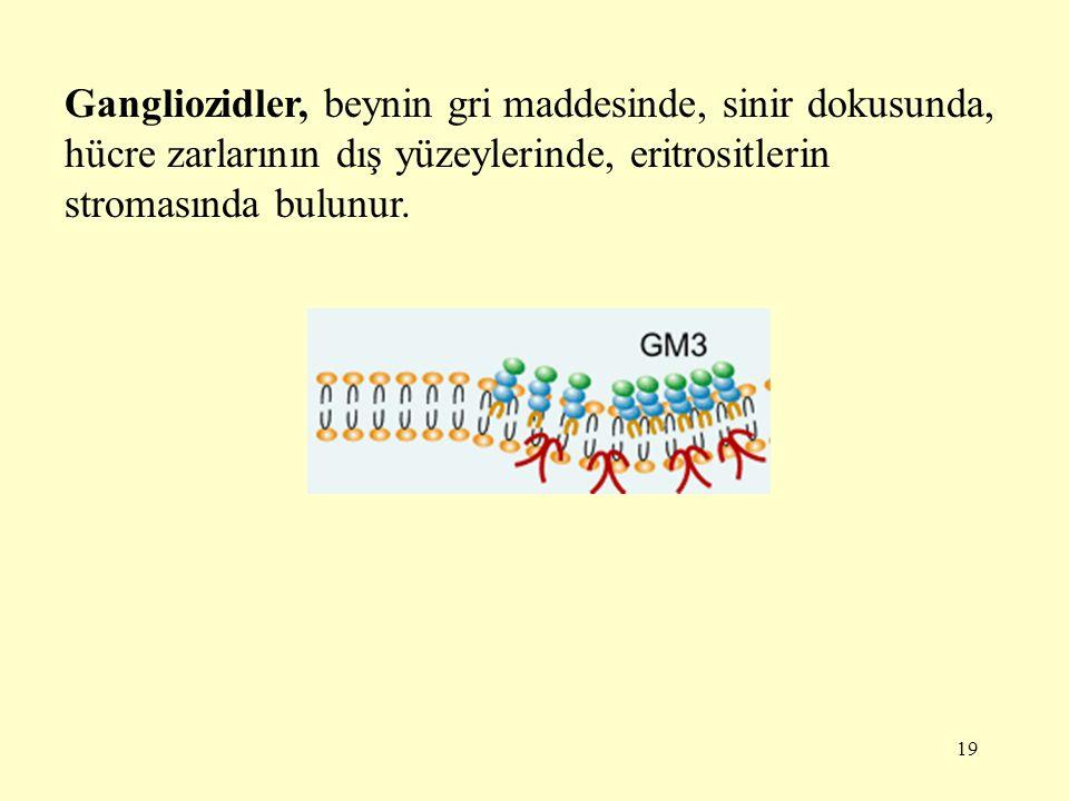 19 Gangliozidler, beynin gri maddesinde, sinir dokusunda, hücre zarlarının dış yüzeylerinde, eritrositlerin stromasında bulunur.