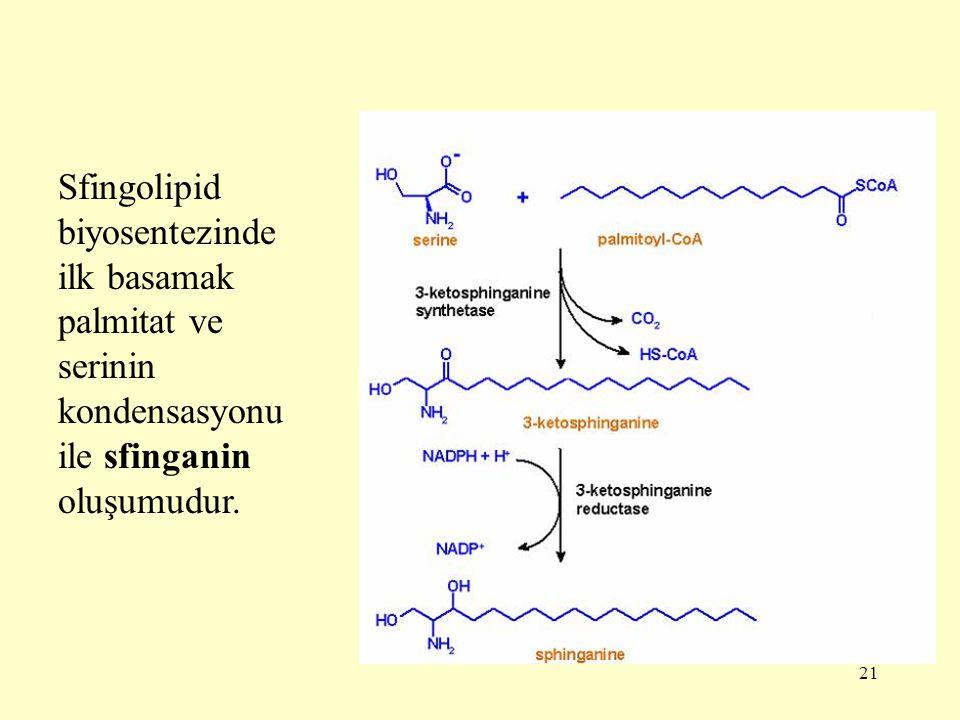 21 Sfingolipid biyosentezinde ilk basamak palmitat ve serinin kondensasyonu ile sfinganin oluşumudur.
