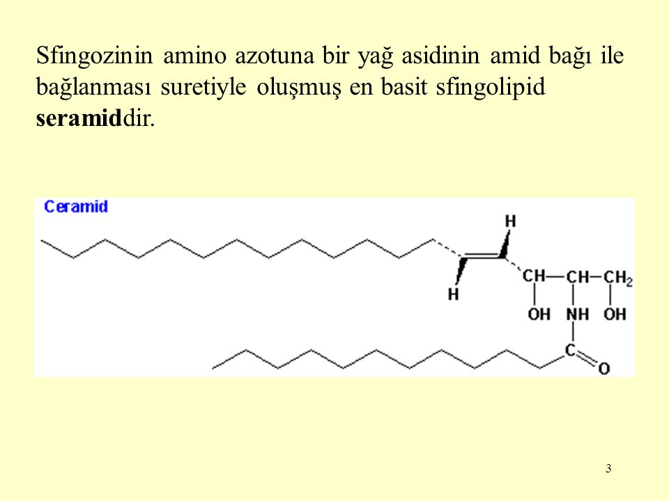 24 Seramide baş grup olarak UDP ile taşınan monosakkarit eklenmesiyle serebrozid oluşur.