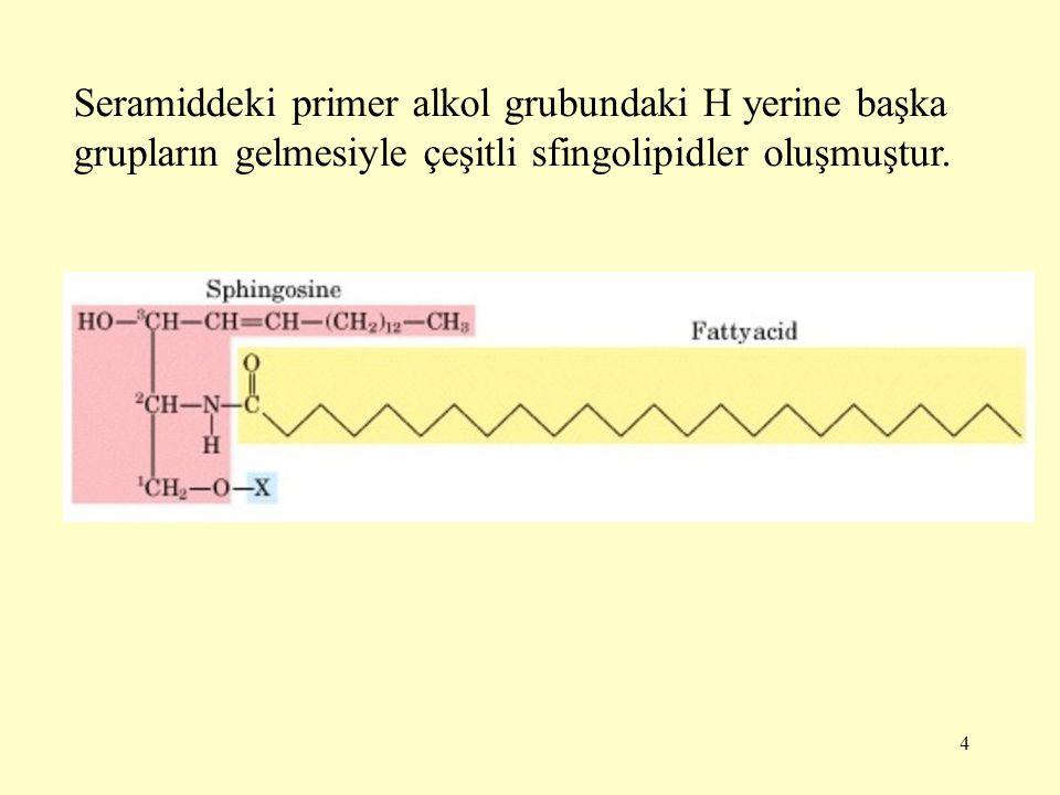 4 Seramiddeki primer alkol grubundaki H yerine başka grupların gelmesiyle çeşitli sfingolipidler oluşmuştur.
