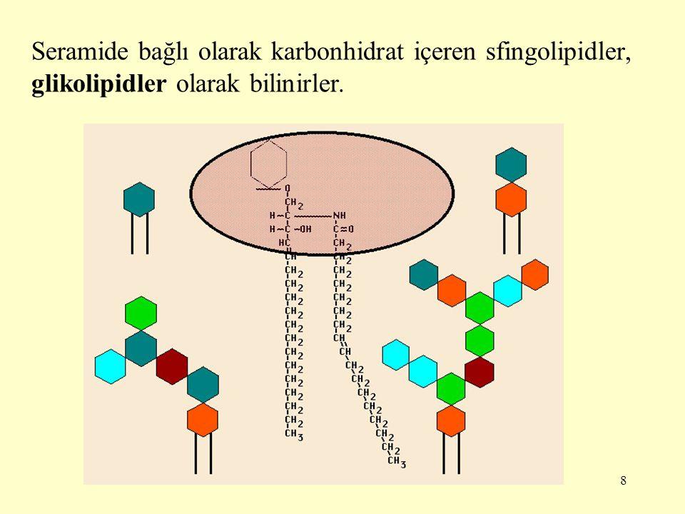 8 Seramide bağlı olarak karbonhidrat içeren sfingolipidler, glikolipidler olarak bilinirler.