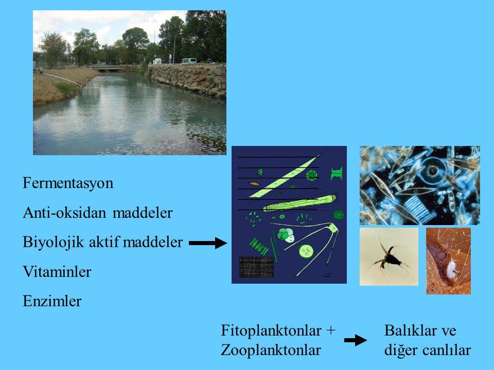 Fermentasyon Anti-oksidan maddeler Biyolojik aktif maddeler Vitaminler Enzimler Fitoplanktonlar + Zooplanktonlar Balıklar ve diğer canlılar