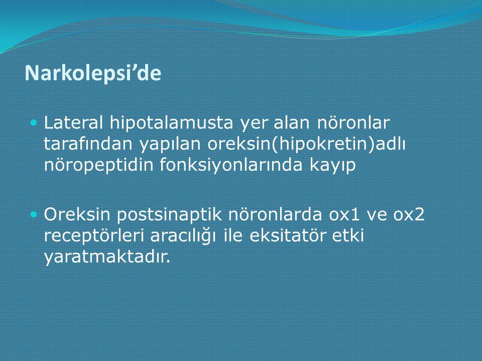 Narkolepsi'de Lateral hipotalamusta yer alan nöronlar tarafından yapılan oreksin(hipokretin)adlı nöropeptidin fonksiyonlarında kayıp Oreksin postsinap