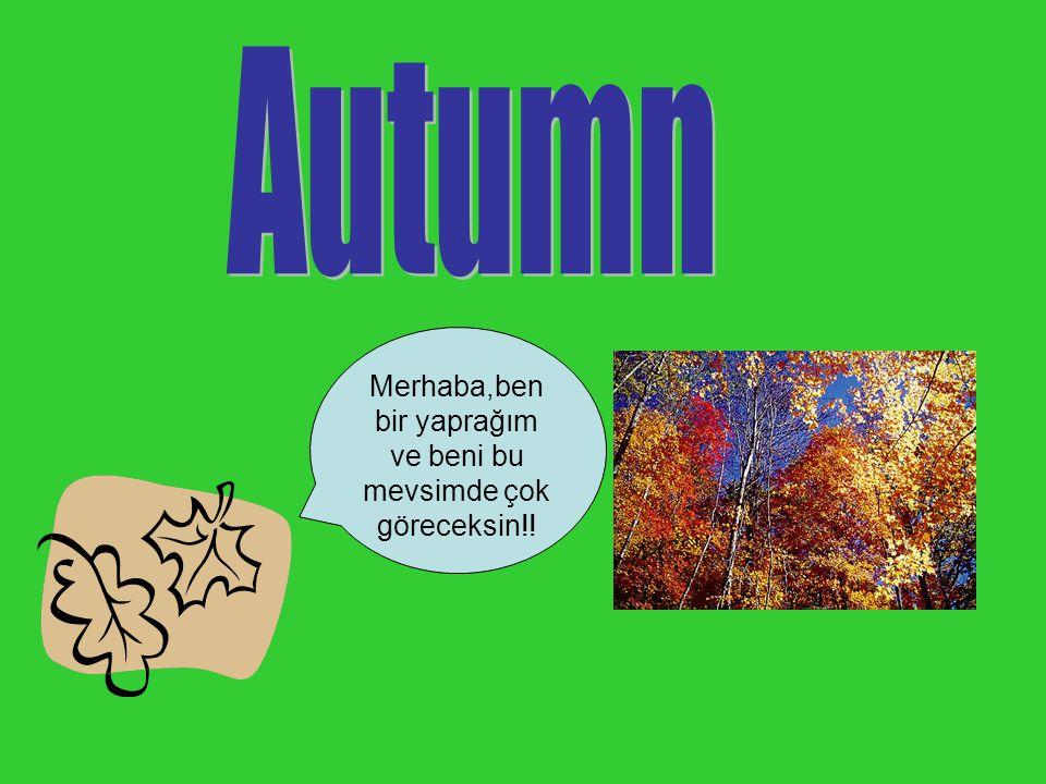 Merhaba,ben bir yaprağım ve beni bu mevsimde çok göreceksin!!