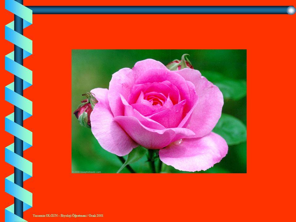 BÜYÜME VE GELİŞME DÖNEMLERİ 1.Bebeklik Dönemi ( 0 -12 Ay) 2.Çocukluk dönemi ( 1 - 6 Yaş) 3.Okul Çağı Dönemi (6 - 11 Yaş) 4.Ergenlik Dönemi (12- 21 Yaş) 5.Yetişkinlik Dönemi ( 2- 65 Yaş) 6.Yaşlılık Dönemi (65-.....)