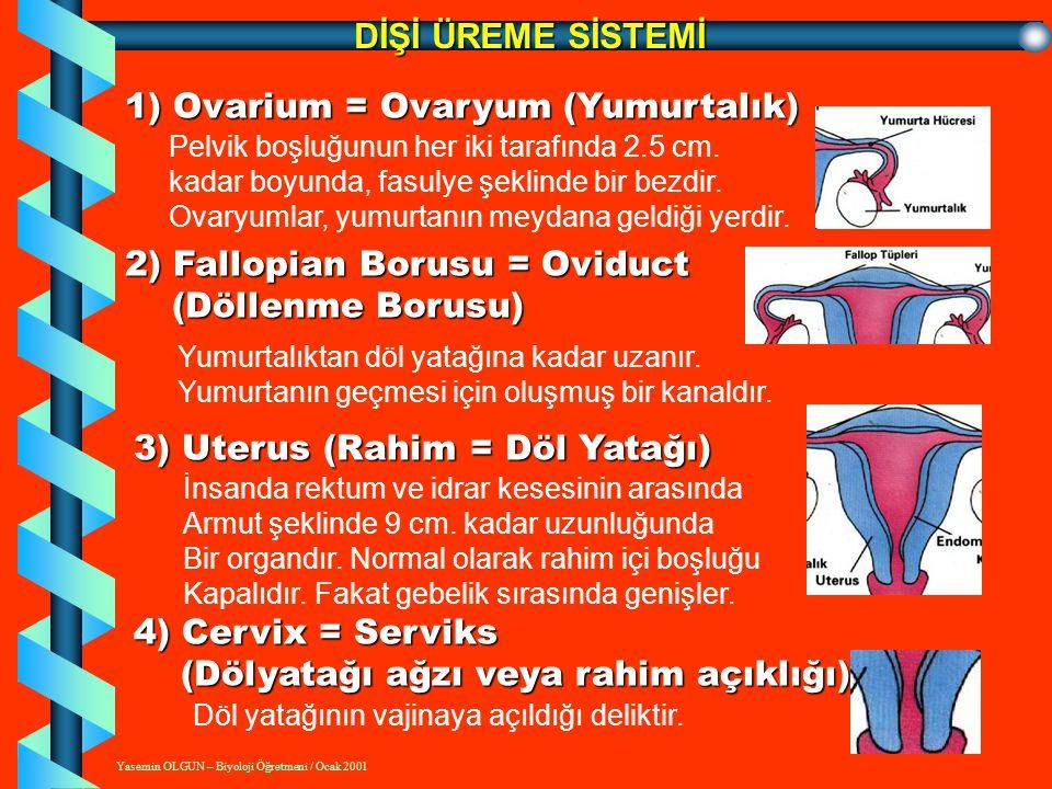 Yasemin OLGUN – Biyoloji Öğretmeni / Ocak 2001 DİŞİ ÜREME SİSTEMİ 5) Vagina = Vajina (Çiftleşme Borusu) Normal uzunluğu 8-10 cm.