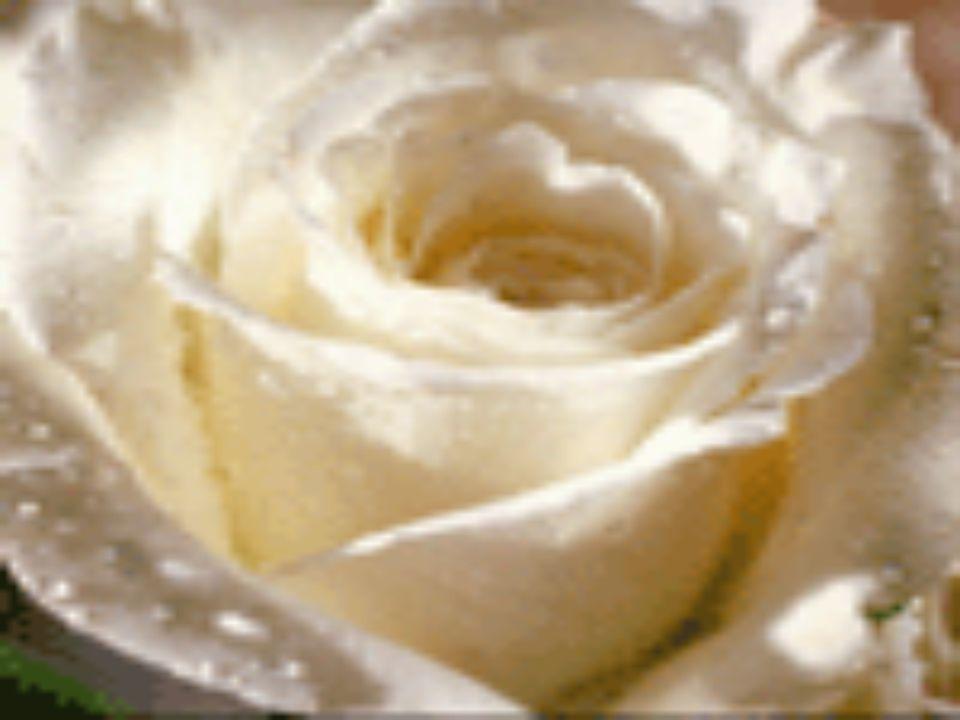 HüLYaMa Hülyaların hep gerçek olsun Üzüntüler senden çok çok uzak dursun Lacivertler düşmesin yüreğine Yaşamın hep beyaz gül olsun Arkadaşım,canım dostum,bacım Mavilere tutun maviler umudun olsun Bir beyaz gül gibisin El değil artık bana can gibisin Yoluna gülleri sereyim Ağlamasın o güzel yüzün hep gülsün Zerre yaş gelirse gözünden,mutluluktan olsun Gecelerin gündüze dönsün Üzmesin seni hayatta hiç bir şey Leke sürülmesin mutluluklarına Üfür soluğunu dünyaya hesapsızca Mutlu aç gözlerini her doğan yeni sabaha MıSRa HüLYaMa Hülyaların hep gerçek olsun Üzüntüler senden çok çok uzak dursun Lacivertler düşmesin yüreğine Yaşamın hep beyaz gül olsun Arkadaşım,canım dostum,bacım Mavilere tutun maviler umudun olsun Bir beyaz gül gibisin El değil artık bana can gibisin Yoluna gülleri sereyim Ağlamasın o güzel yüzün hep gülsün Zerre yaş gelirse gözünden,mutluluktan olsun Gecelerin gündüze dönsün Üzmesin seni hayatta hiç bir şey Leke sürülmesin mutluluklarına Üfür soluğunu dünyaya hesapsızca Mutlu aç gözlerini her doğan yeni sabaha MıSRa