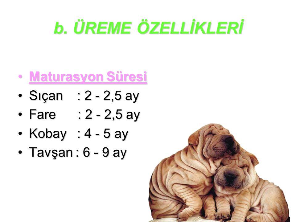 b. ÜREME ÖZELLİKLERİ Maturasyon SüresiMaturasyon Süresi Sıçan : 2 - 2,5 aySıçan : 2 - 2,5 ay Fare : 2 - 2,5 ayFare : 2 - 2,5 ay Kobay : 4 - 5 ayKobay