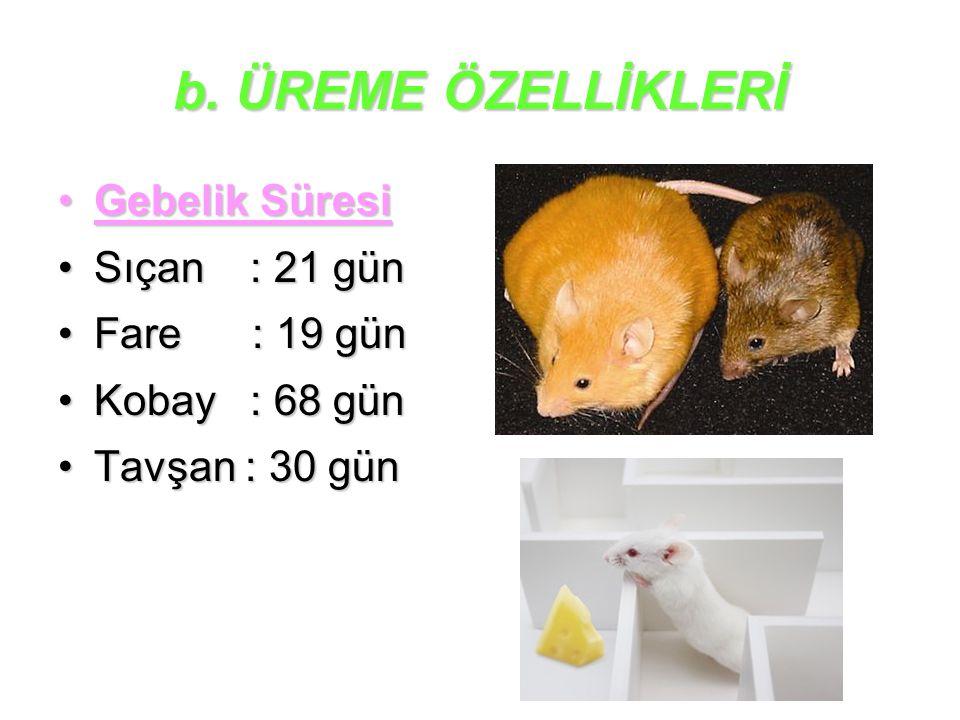 b. ÜREME ÖZELLİKLERİ Gebelik SüresiGebelik Süresi Sıçan : 21 günSıçan : 21 gün Fare : 19 günFare : 19 gün Kobay : 68 günKobay : 68 gün Tavşan : 30 gün