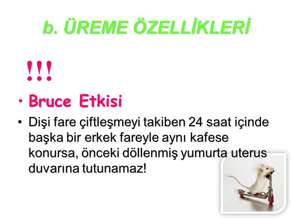 b.ÜREME ÖZELLİKLERİ !!.