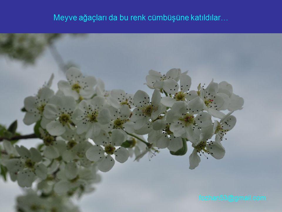 Meyve ağaçları da bu renk cümbüşüne katıldılar… fozhan53@gmail.com