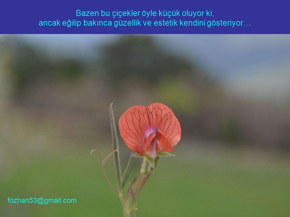 Bazen bu çiçekler öyle küçük oluyor ki, ancak eğilip bakınca güzellik ve estetik kendini gösteriyor… fozhan53@gmail.com