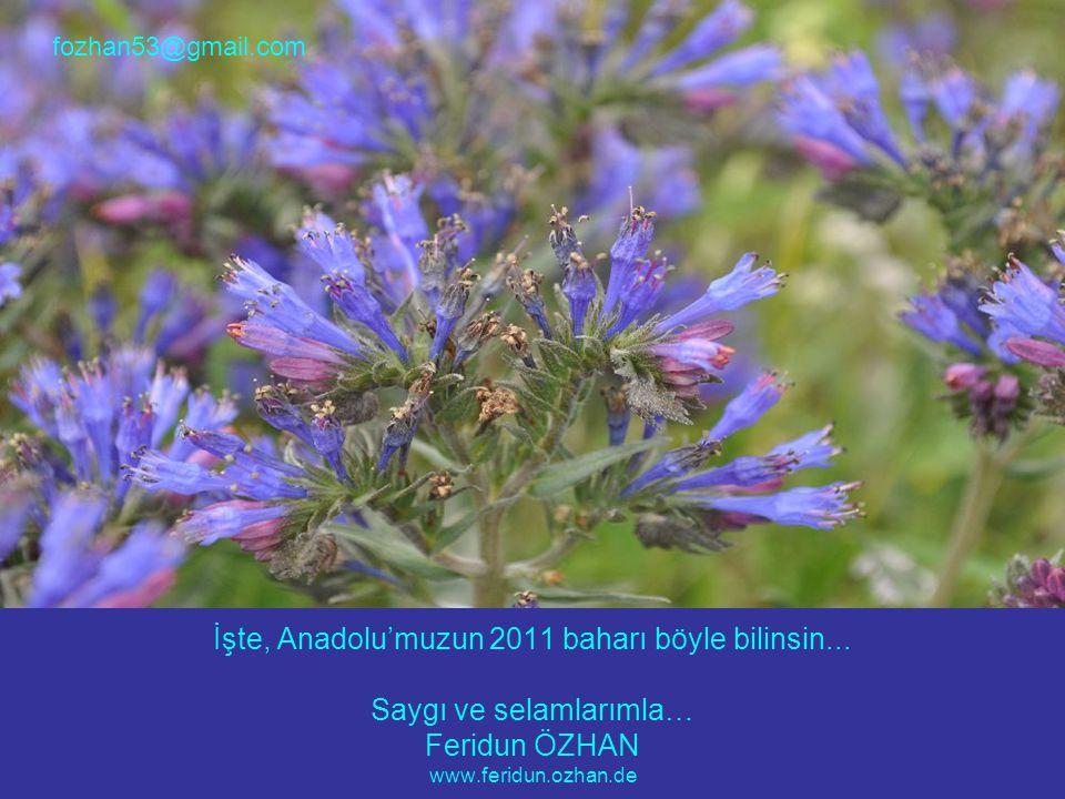 İşte, Anadolu'muzun 2011 baharı böyle bilinsin...