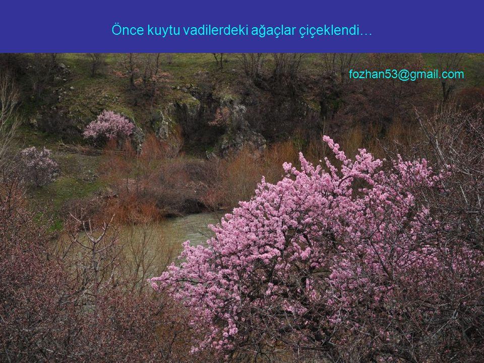 Önce kuytu vadilerdeki ağaçlar çiçeklendi… fozhan53@gmail.com