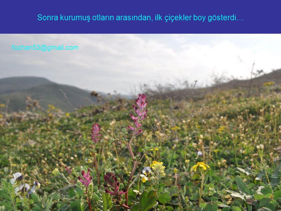 Sonra kurumuş otların arasından, ilk çiçekler boy gösterdi… fozhan53@gmail.com