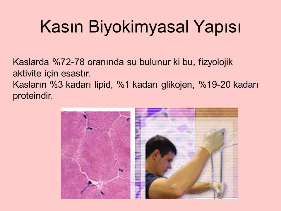 Kaslarda %72-78 oranında su bulunur ki bu, fizyolojik aktivite için esastır. Kasların %3 kadarı lipid, %1 kadarı glikojen, %19-20 kadarı proteindir. K