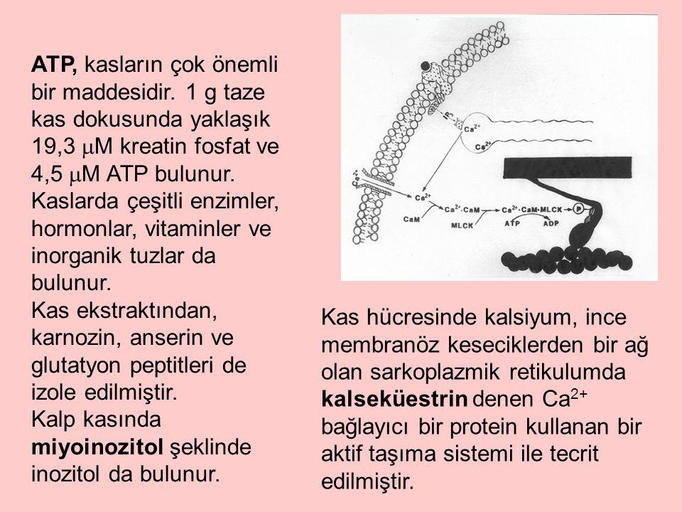 ATP, kasların çok önemli bir maddesidir. 1 g taze kas dokusunda yaklaşık 19,3  M kreatin fosfat ve 4,5  M ATP bulunur. Kaslarda çeşitli enzimler, ho