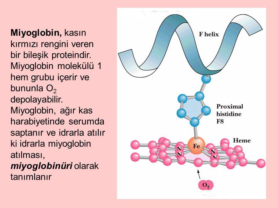 Miyoglobin, kasın kırmızı rengini veren bir bileşik proteindir. Miyoglobin molekülü 1 hem grubu içerir ve bununla O 2 depolayabilir. Miyoglobin, ağır