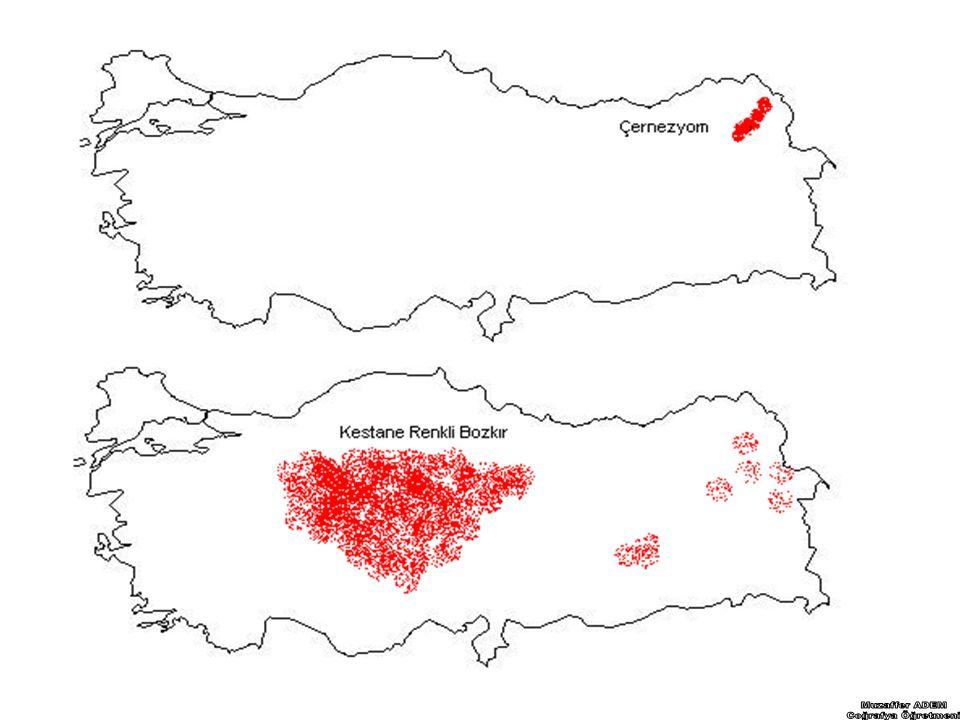 TÜRKİYE'DE KARSTİK ŞEKİLLER Kalker, jips, Dolomit, gibi kayaçların yaygın olduğu sahalarda oluşan şekillere karstik şekiller adı verilir.