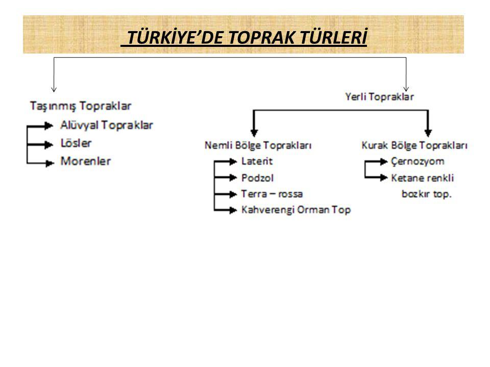 TÜRKİYE'DE TOPRAK TÜRLERİ
