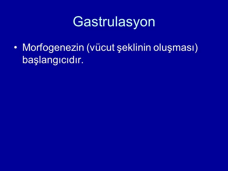 Gastrulasyon Morfogenezin (vücut şeklinin oluşması) başlangıcıdır.