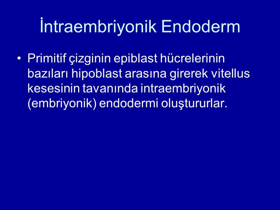 İntraembriyonik Endoderm Primitif çizginin epiblast hücrelerinin bazıları hipoblast arasına girerek vitellus kesesinin tavanında intraembriyonik (embr
