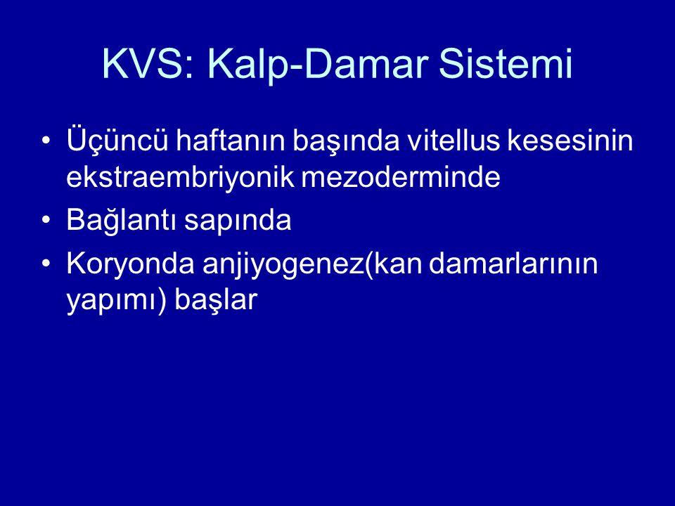 KVS: Kalp-Damar Sistemi Üçüncü haftanın başında vitellus kesesinin ekstraembriyonik mezoderminde Bağlantı sapında Koryonda anjiyogenez(kan damarlarını
