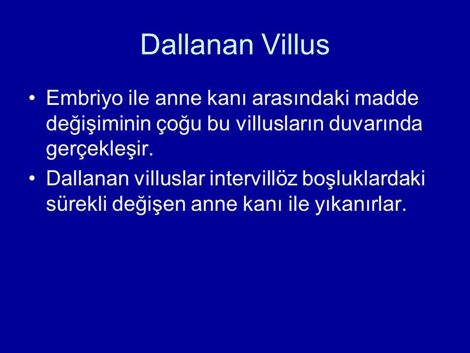 Dallanan Villus Embriyo ile anne kanı arasındaki madde değişiminin çoğu bu villusların duvarında gerçekleşir. Dallanan villuslar intervillöz boşluklar