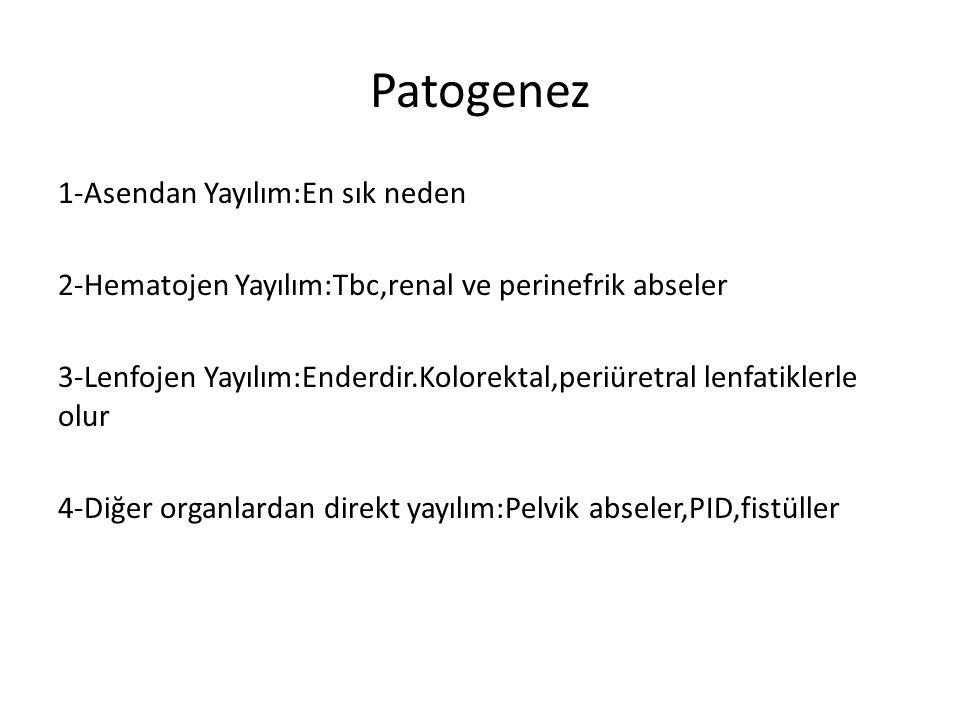 Patogenez 1-Asendan Yayılım:En sık neden 2-Hematojen Yayılım:Tbc,renal ve perinefrik abseler 3-Lenfojen Yayılım:Enderdir.Kolorektal,periüretral lenfat