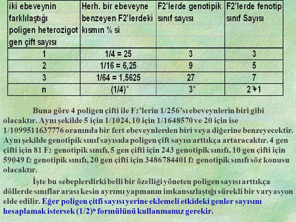 Buna göre 4 poligen çifti ile F 2 'lerin 1/256'sı ebeveynlerin biri gibi olacaktır. Aynı şekilde 5 için 1/1024, 10 için 1/1648570 ve 20 için ise 1/109