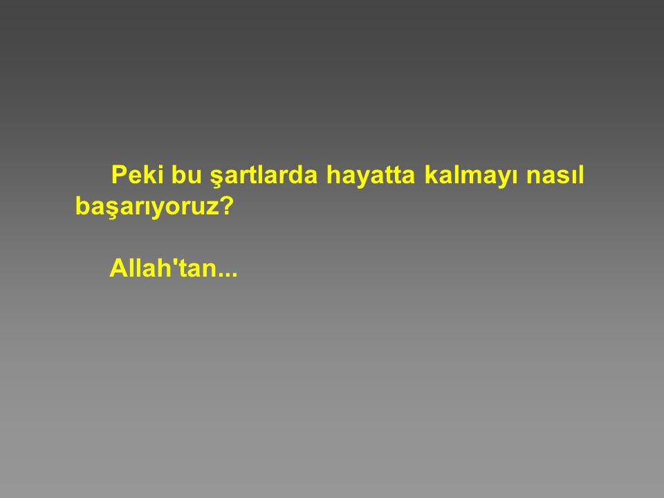 Peki bu şartlarda hayatta kalmayı nasıl başarıyoruz? Allah'tan...